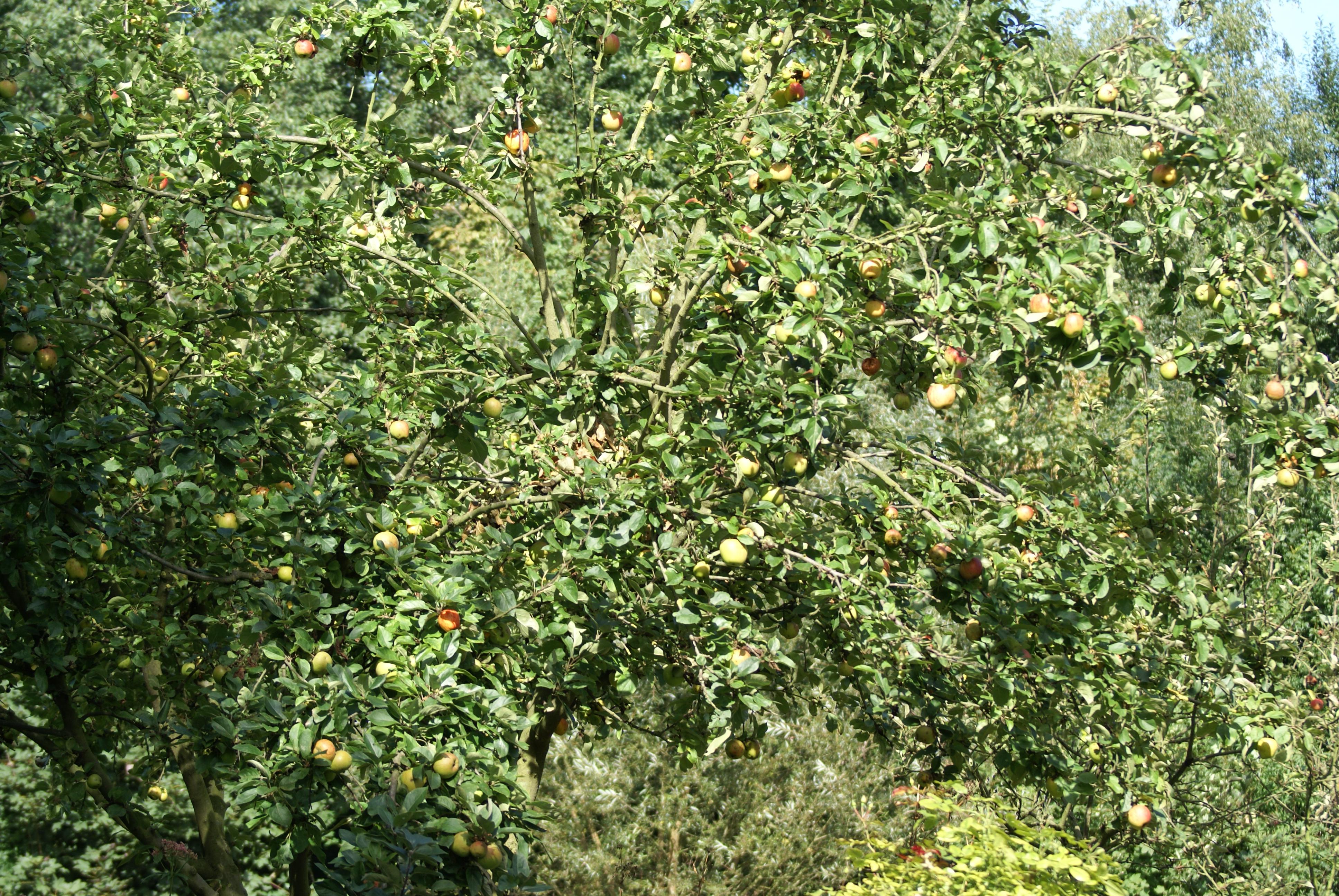 Lutter contre les larves parasites du jardin - Lutter contre les fourmis au jardin ...