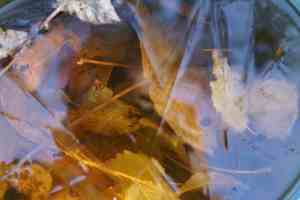 Seau/feuilles/glace