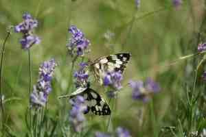 Eblouissement/papillon